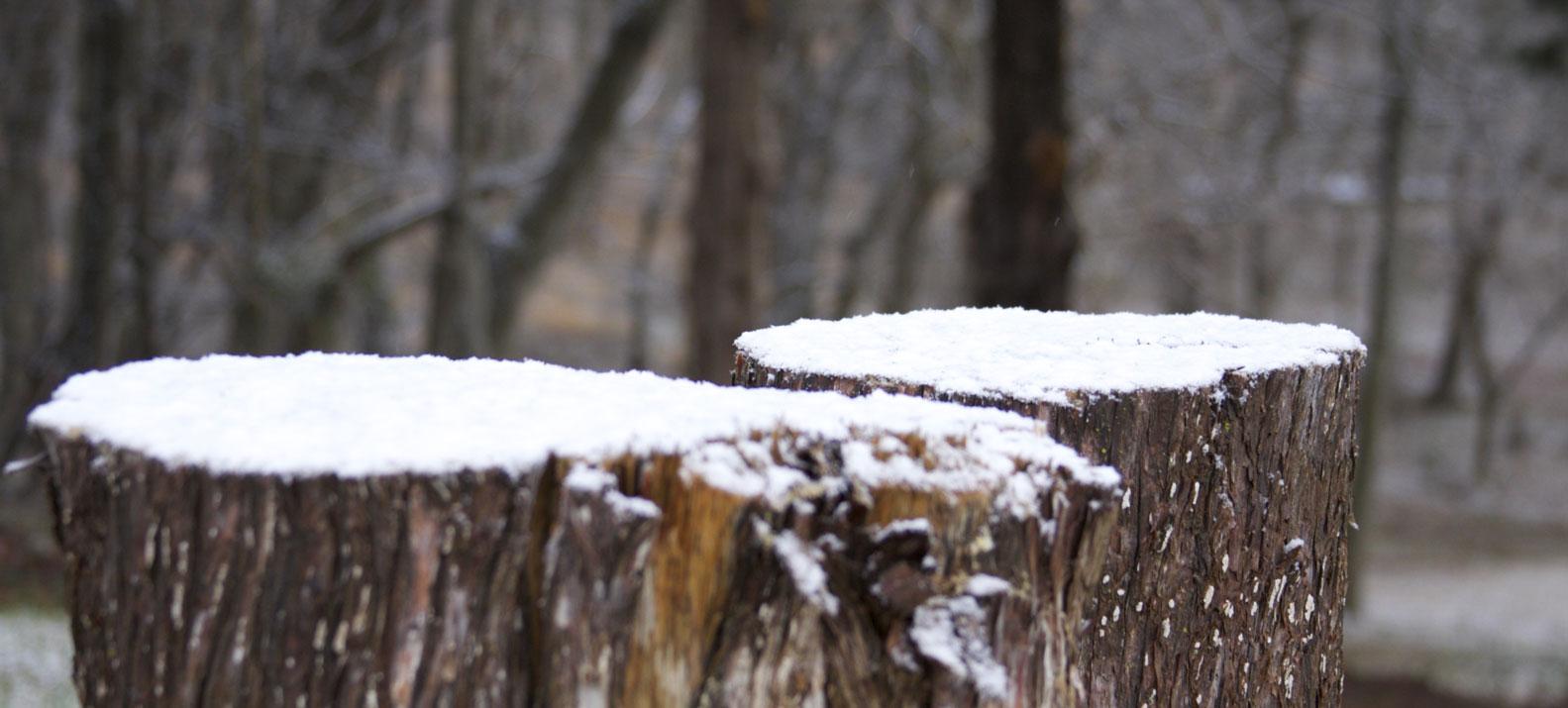 Stumps-IMG_8923